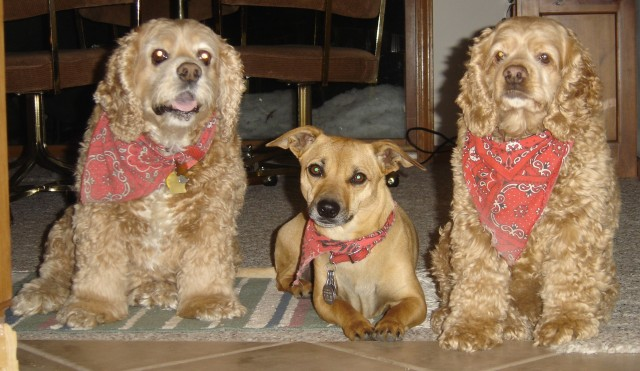 Scoober, Rosie, Lady